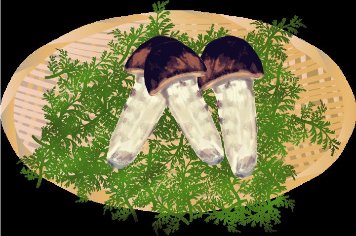 高級食材の松茸のイラスト