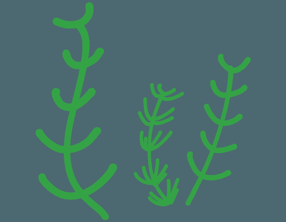 可愛い水草のイラスト