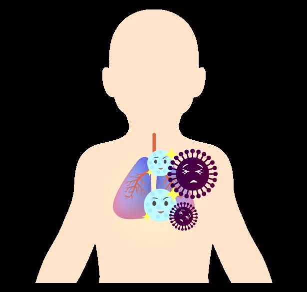 体内で抗体ができるイメージのイラスト