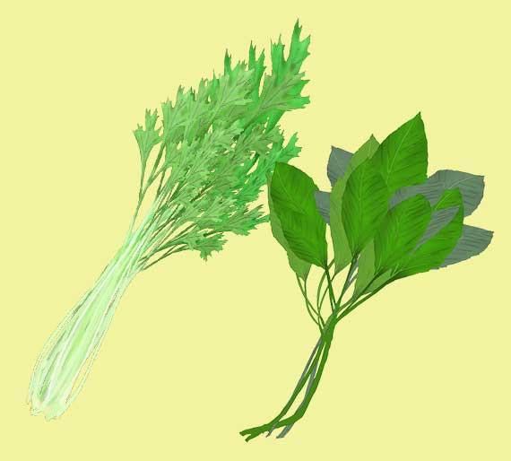 モロヘイヤと水菜のイラスト