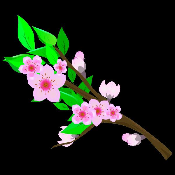 桃の花(枝・葉付き)のイラスト