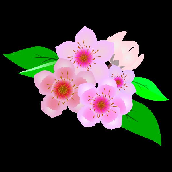 可愛い桃の花のイラスト