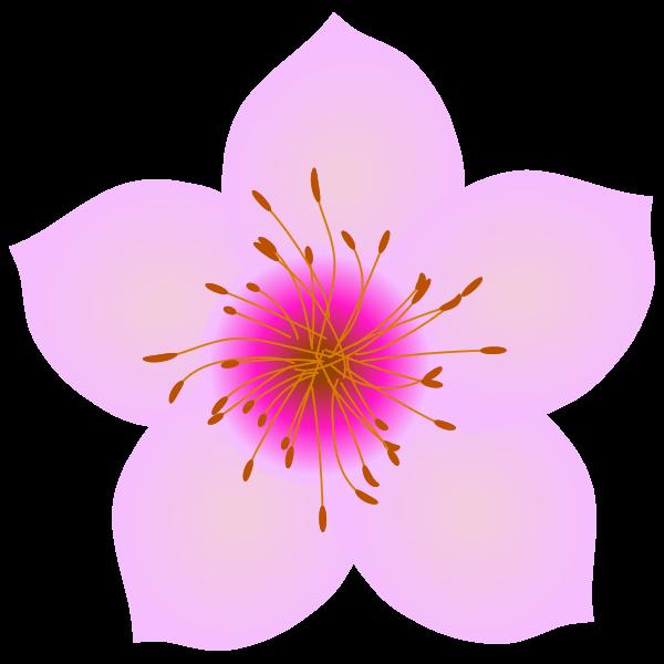 桃の花びらのイラスト