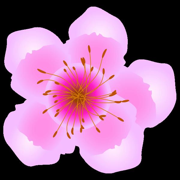 しわのある桃の花のイラスト