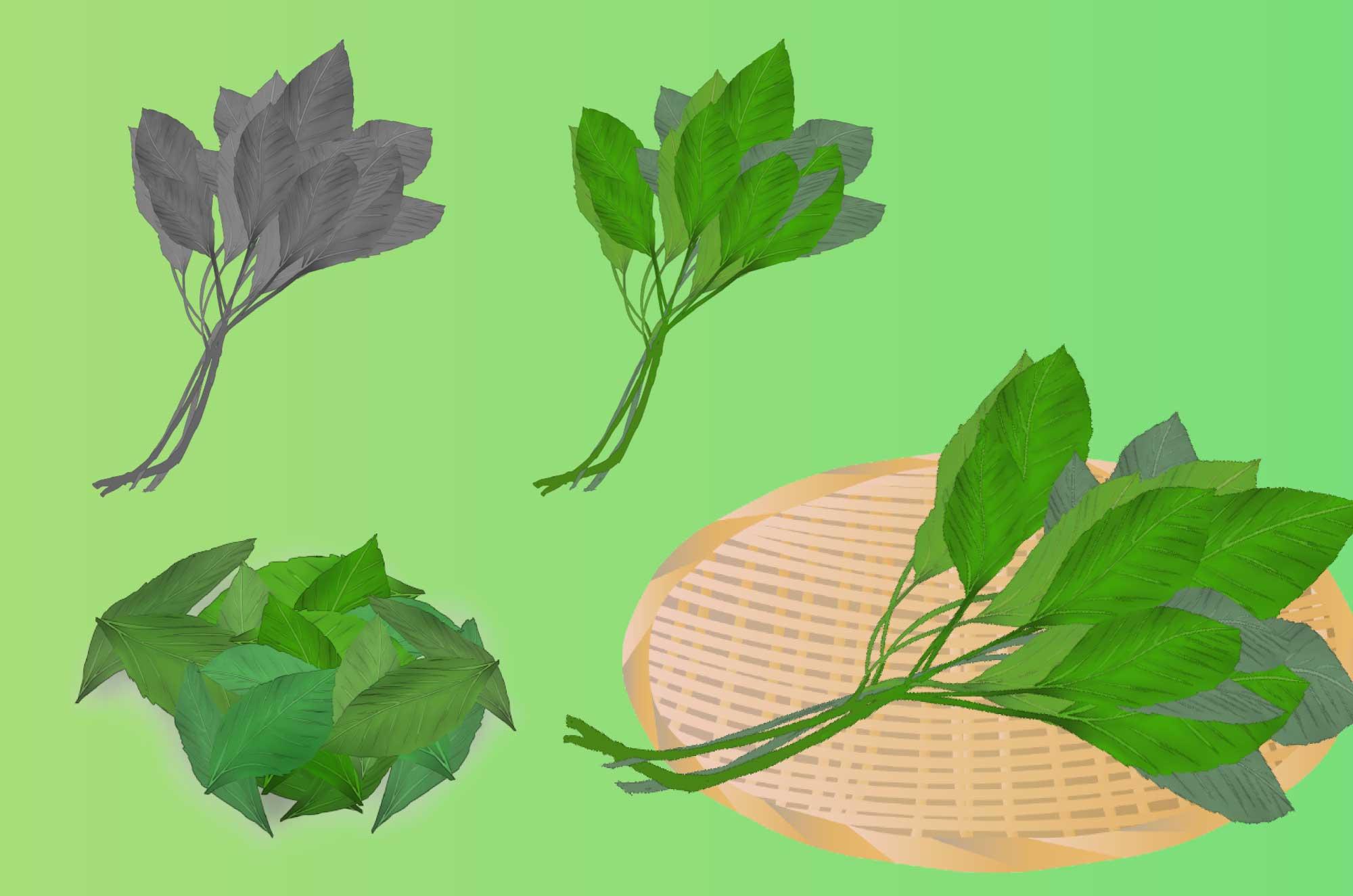 モロヘイヤのイラスト - 無料の手書きの野菜素材