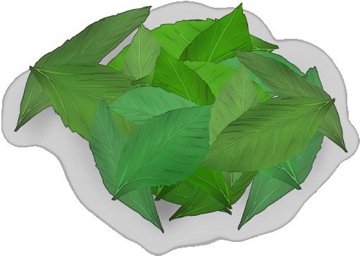 モロヘイヤの葉っぱのイラスト