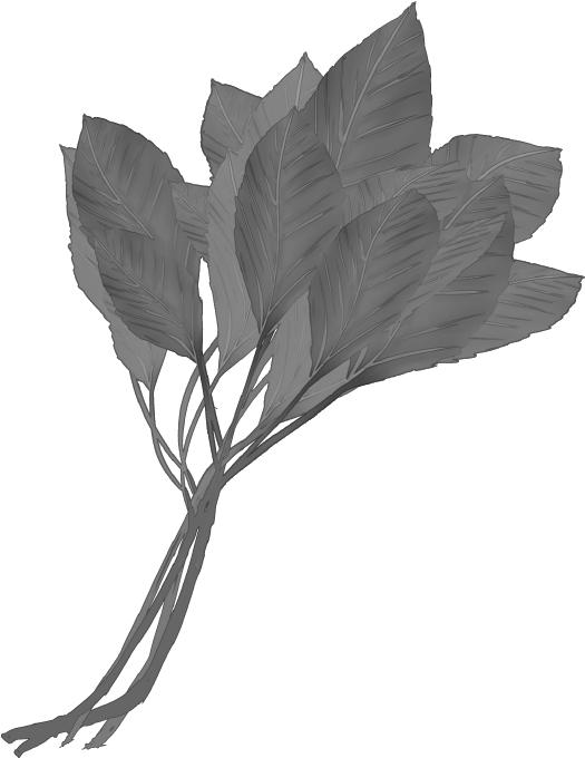 白黒印刷用のモロヘイヤのイラスト