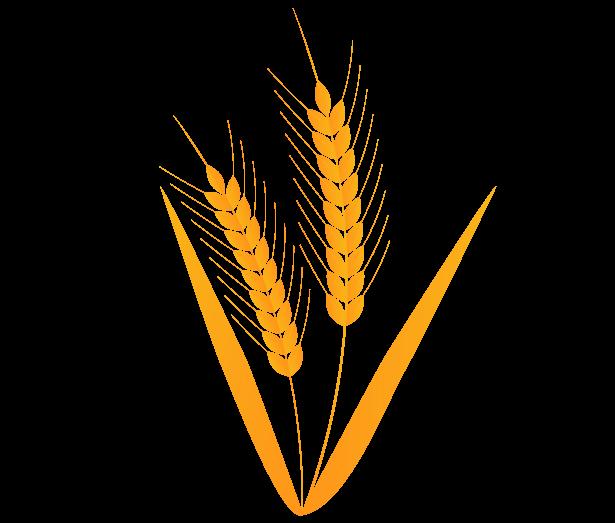 麦2のイラスト