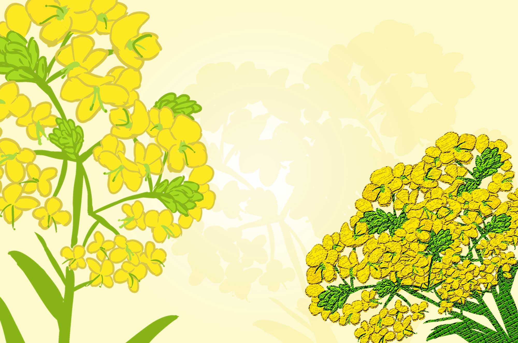 菜の花イラスト - 可愛い黄色い花の無料画像素材集☆