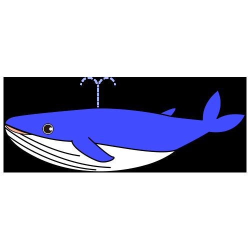 シロナガスクジラのイラスト