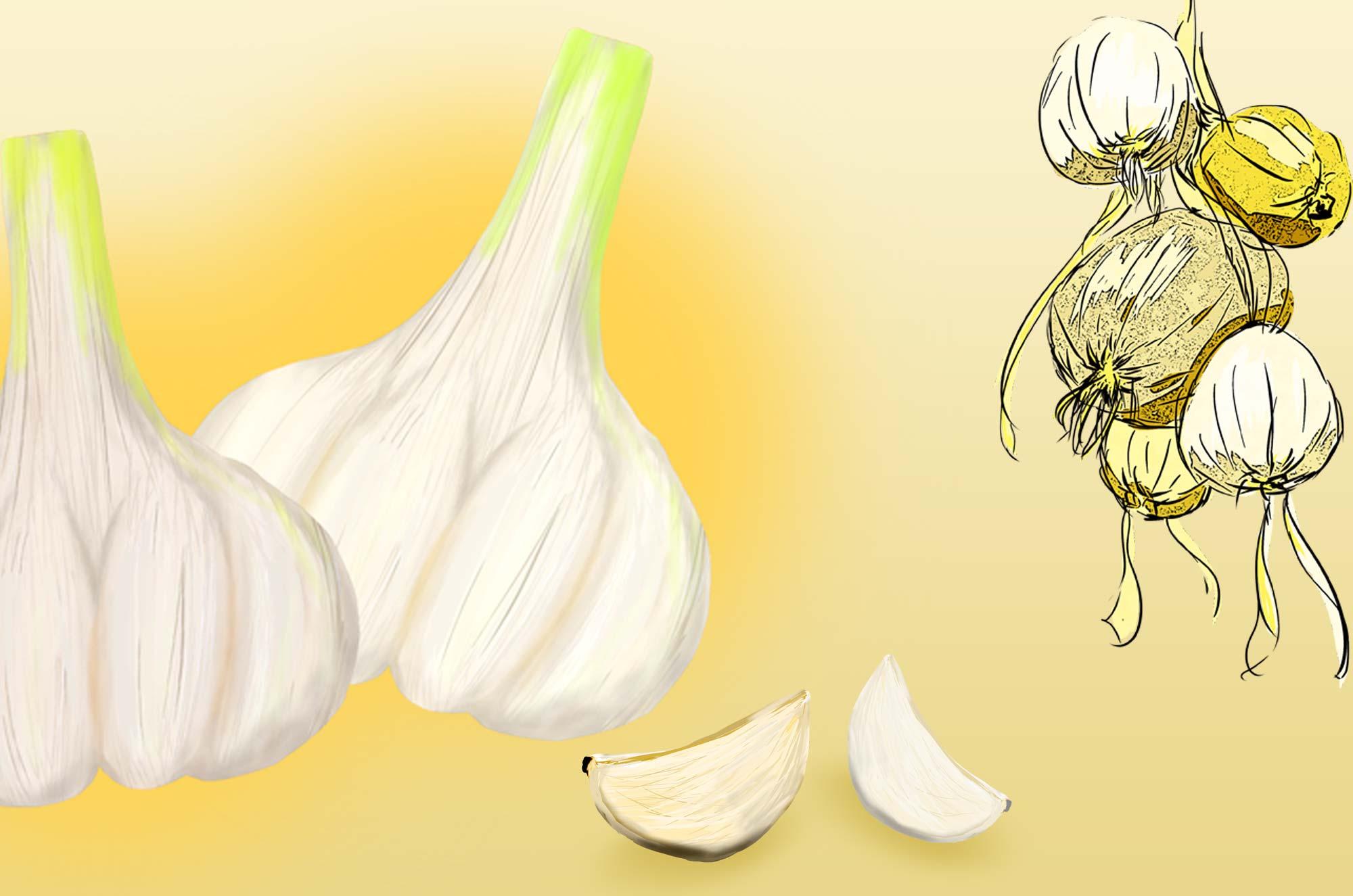 にんにくのイラスト - カットアウト画像アートな野菜素材
