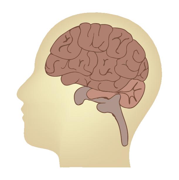 シンプルな脳のイラスト