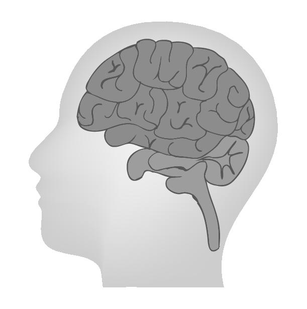 脳のイラスト(白黒)