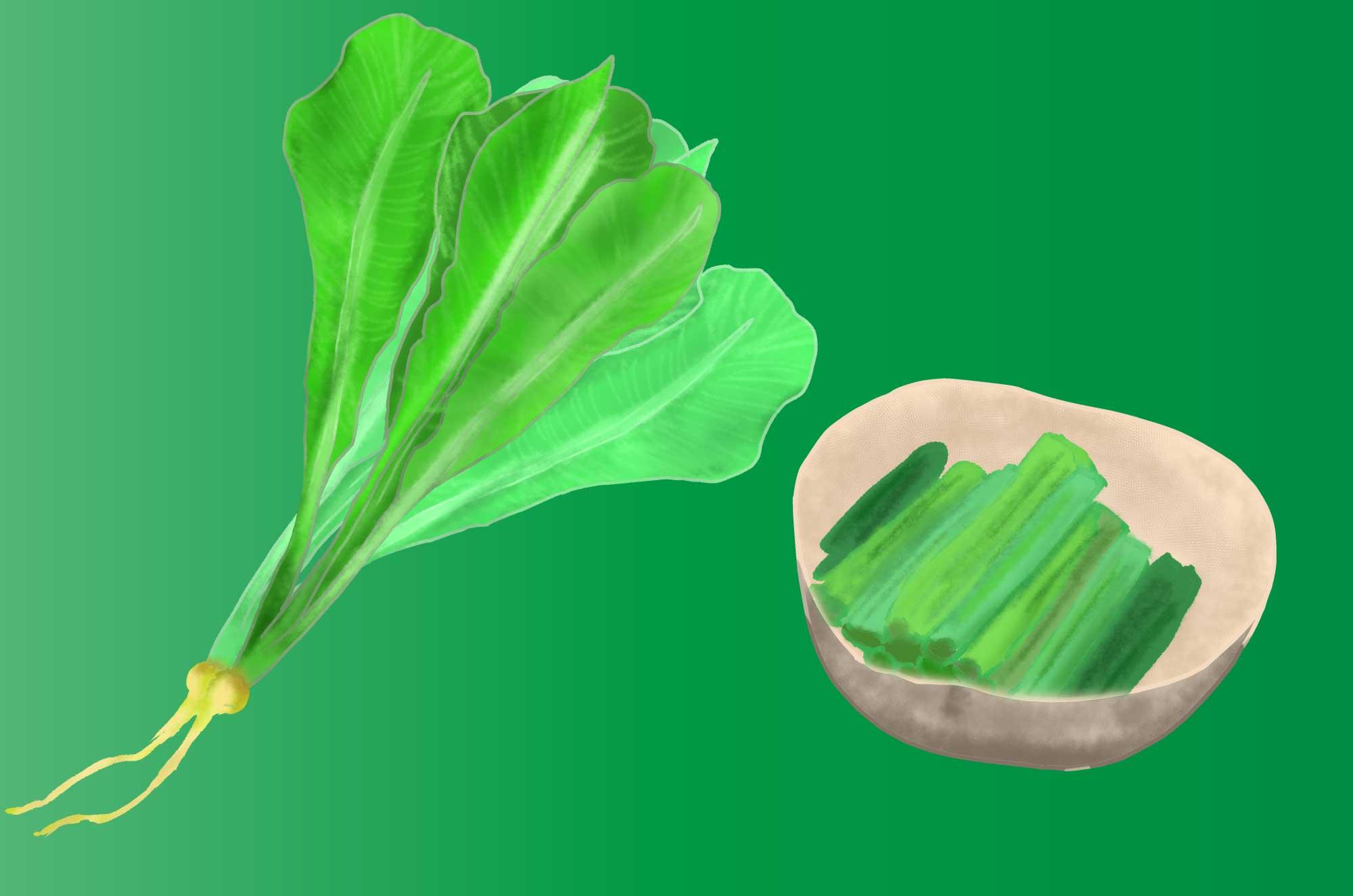 野沢菜(信州菜)のフリーイラスト - 漬物素材にも