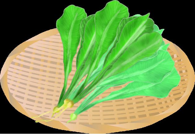 ざるにのった新鮮な野沢菜のイラスト