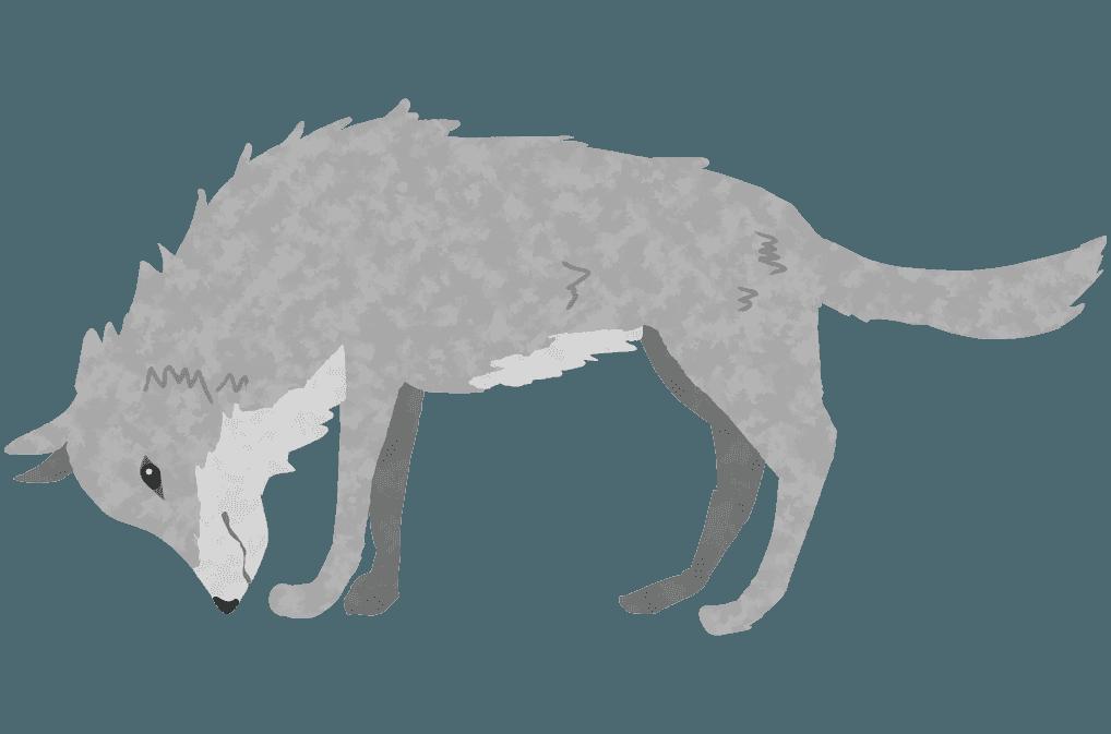 下を向いて餌を探す狼のイラスト