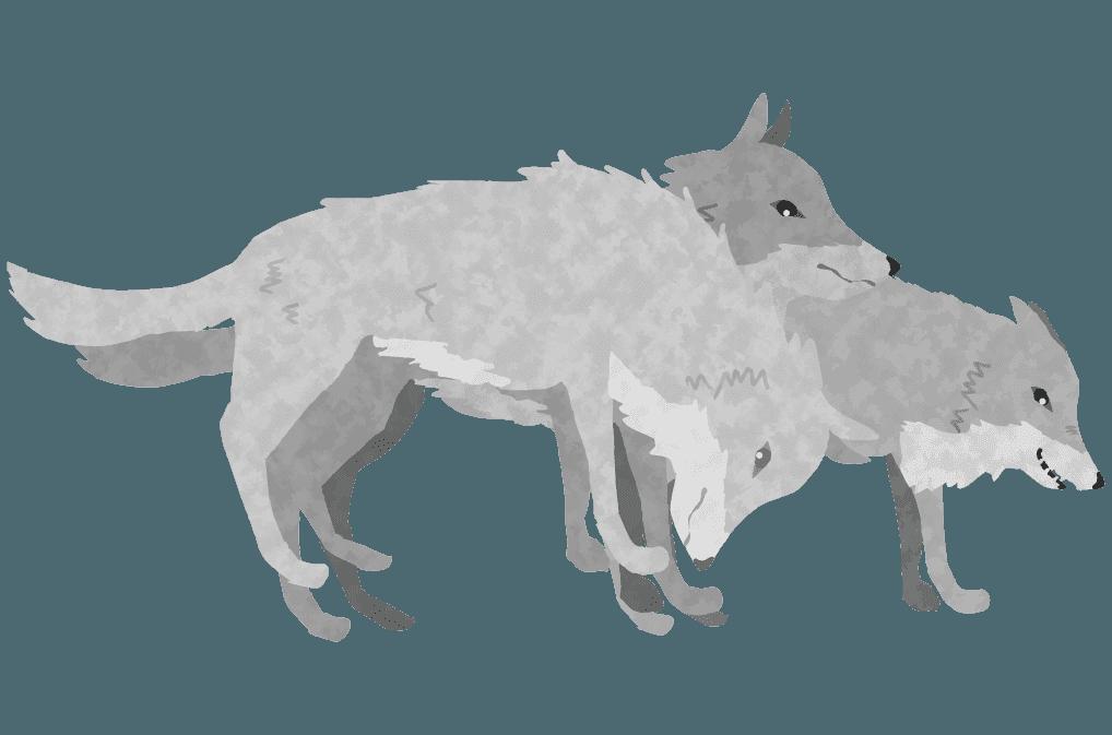 狼の群れのイラスト