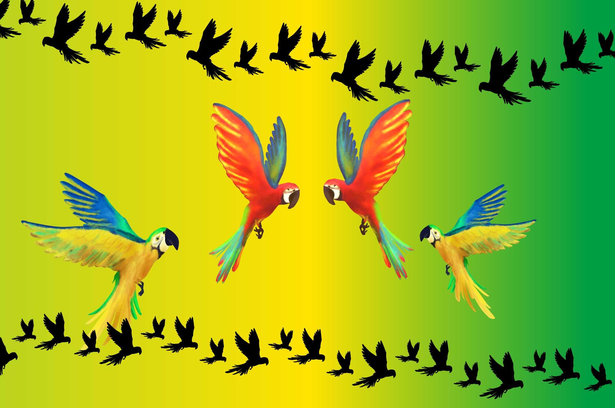 オウムの無料イラスト - 南国の鳥のフリー素材