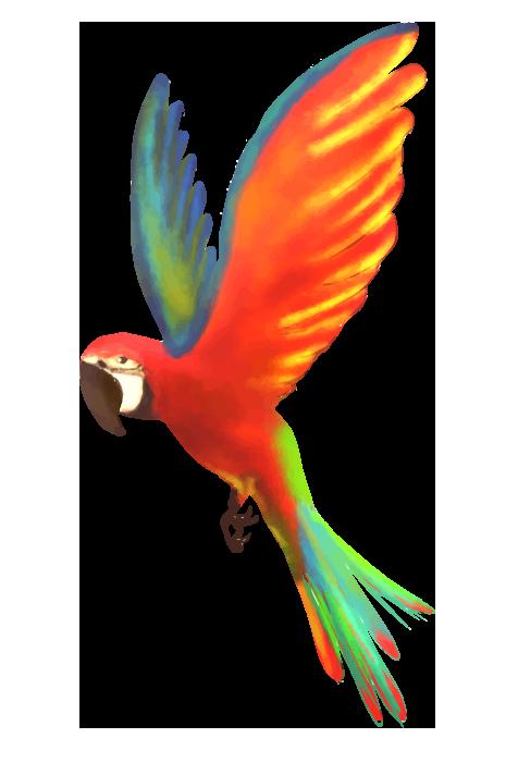羽ばたく綺麗なオウム(赤色系)のイラスト