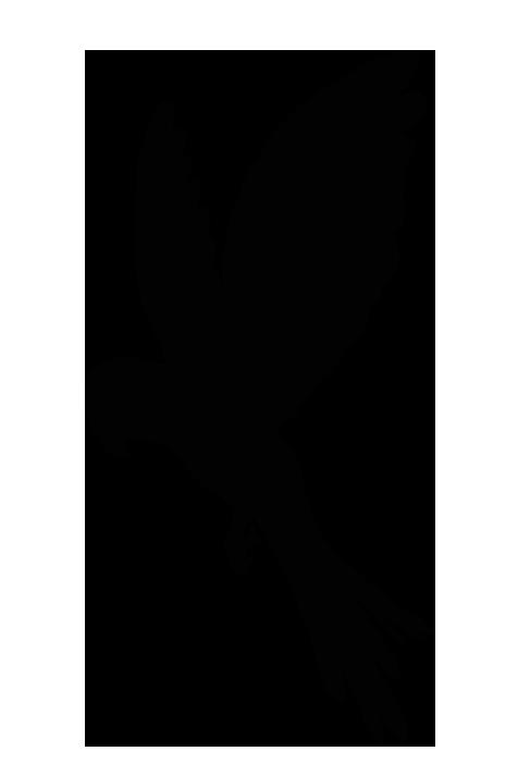 オウムのシルエットイラスト1