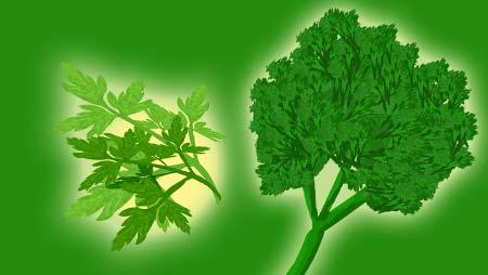 パセリのイラスト - 香る料理の付け合わせ野菜の無料素材
