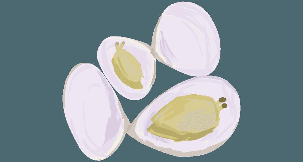 貝殻のついたアサリのイラスト