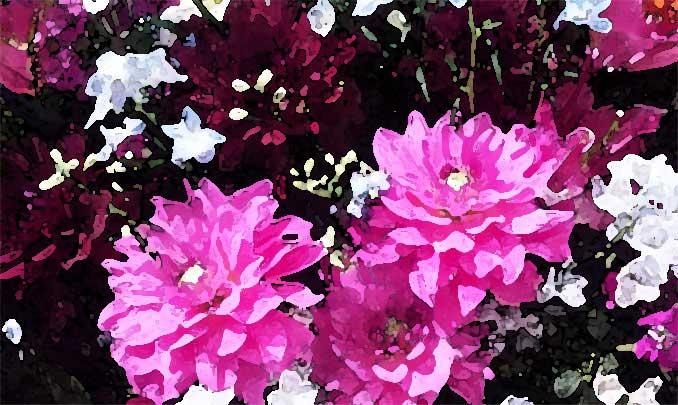 フィルター → フィルターギャラリー → 水彩で加工した花の写真