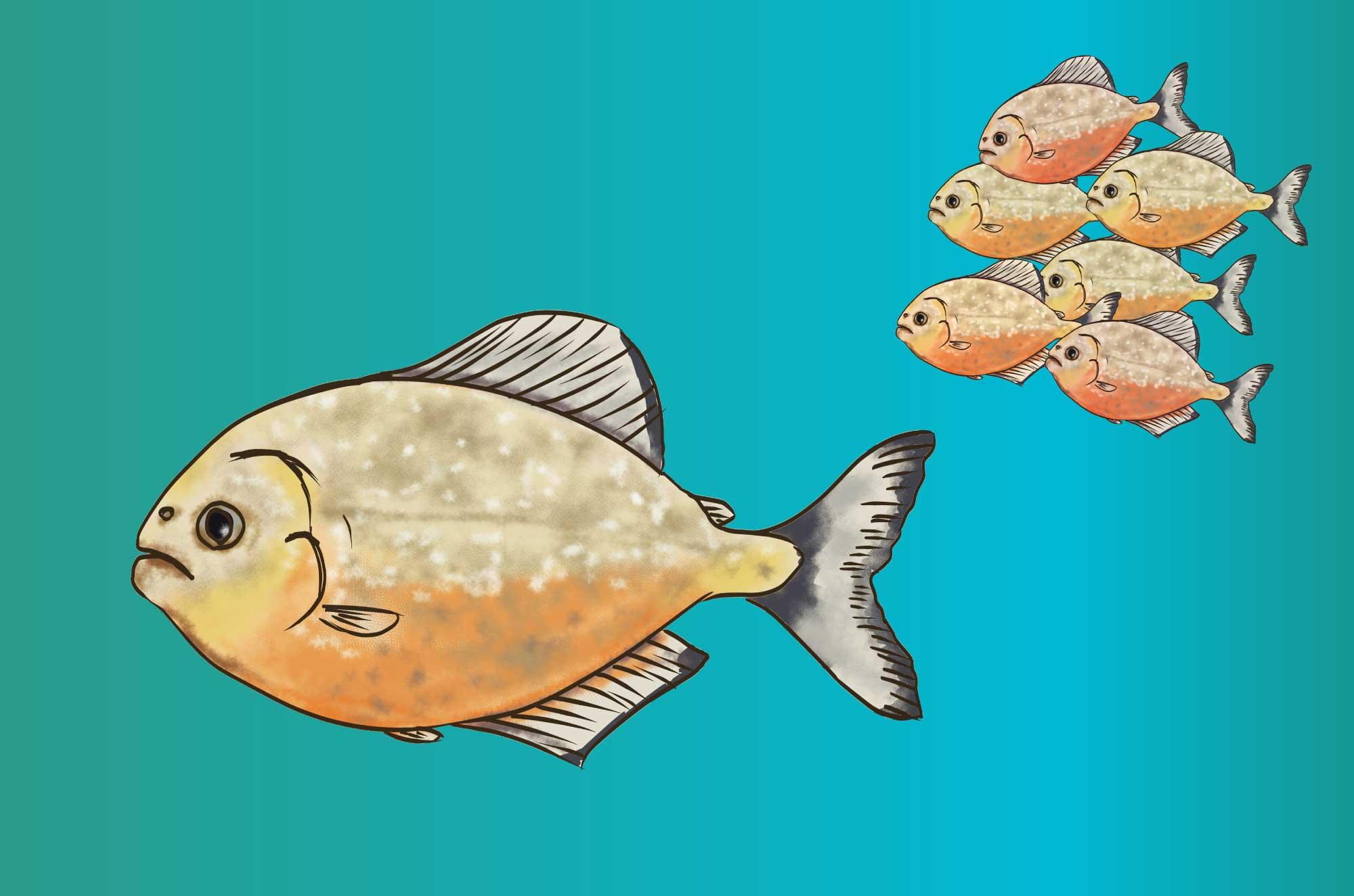 ピラニアのイラスト - アマゾンに生息する魚の素材