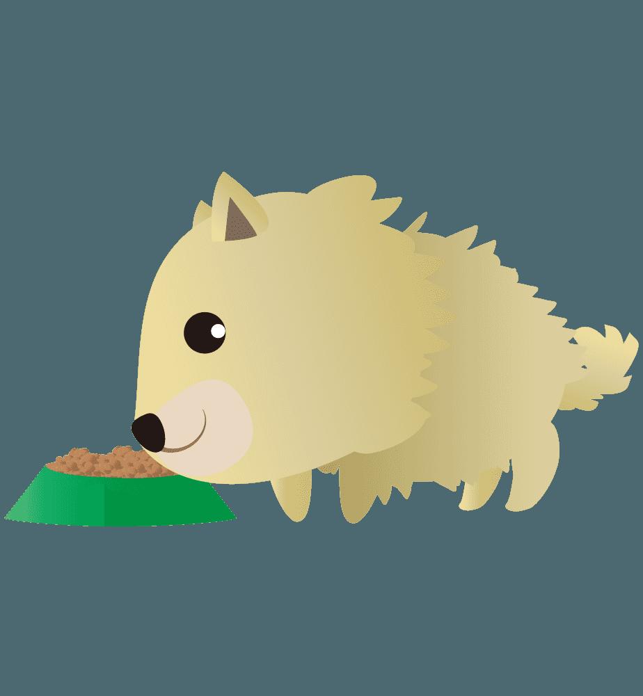 餌を食べるポメラニアンのイラスト