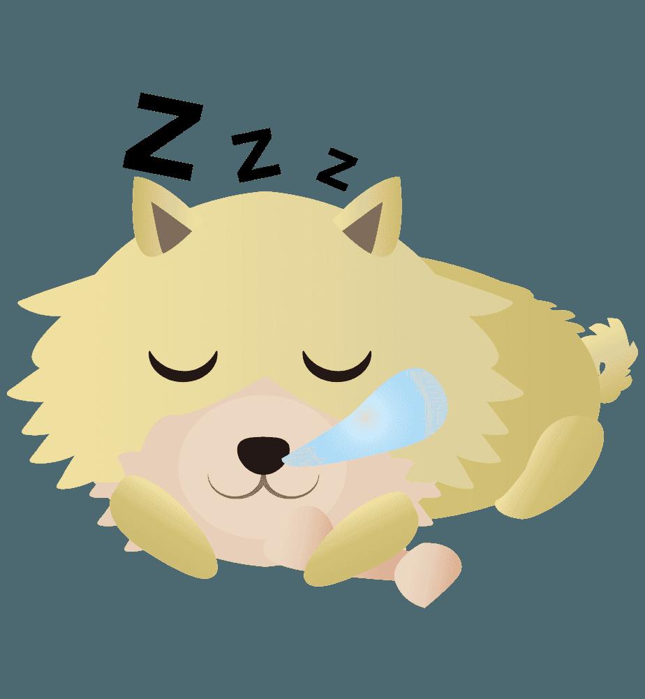 ぐっすり寝ているポメラニアンのイラスト
