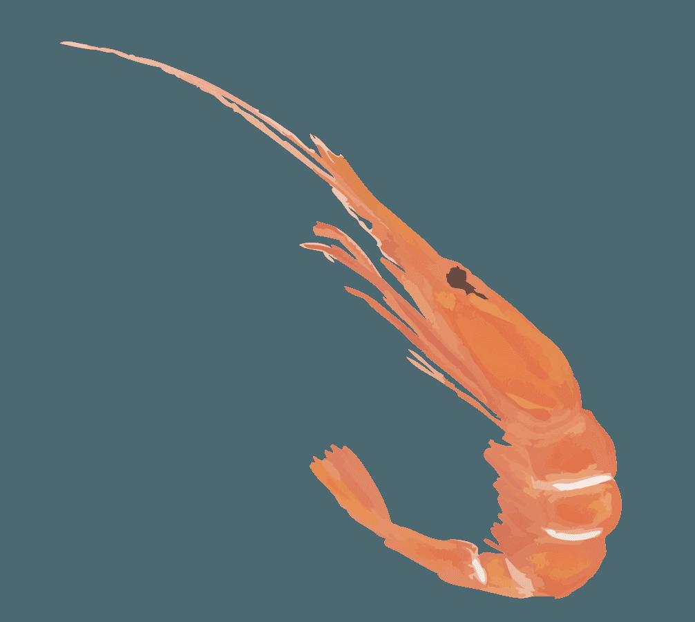 海老のイラスト
