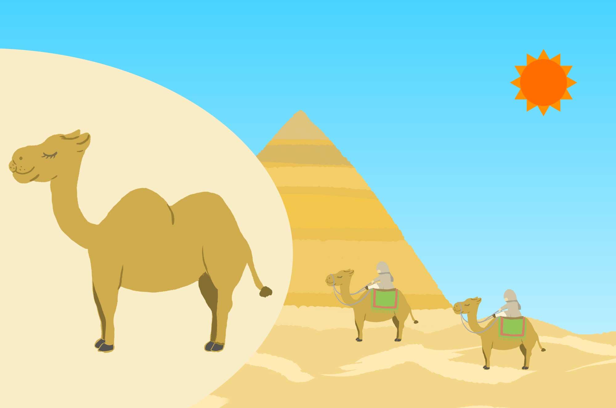可愛いラクダのイラスト - 砂漠の動物無料素材