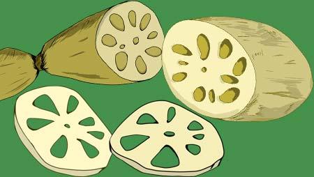 レンコンのイラスト - 手描きの可愛い根菜フリー素材