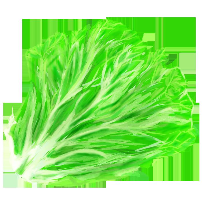 レタスの葉っぱのイラスト