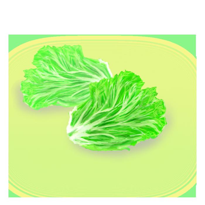レタスの葉っぱの挿絵のイラスト