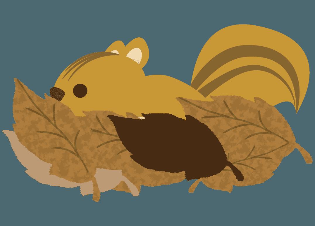 落ち葉に隠れるりすイラスト