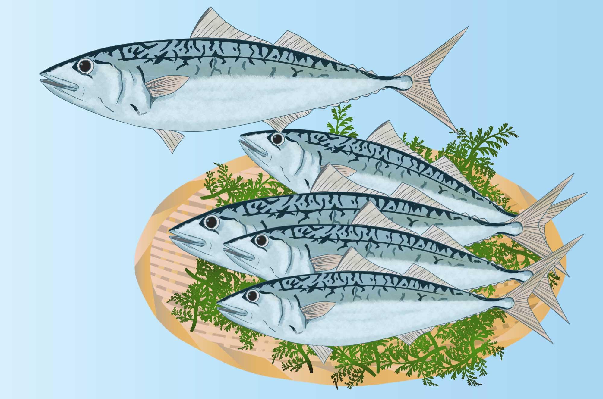 サバのイラスト - 海を自由に泳ぐ魚の無料素材