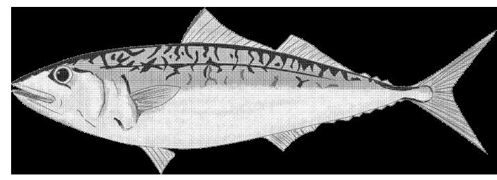 白黒印刷・漫画トーンのサバのイラスト