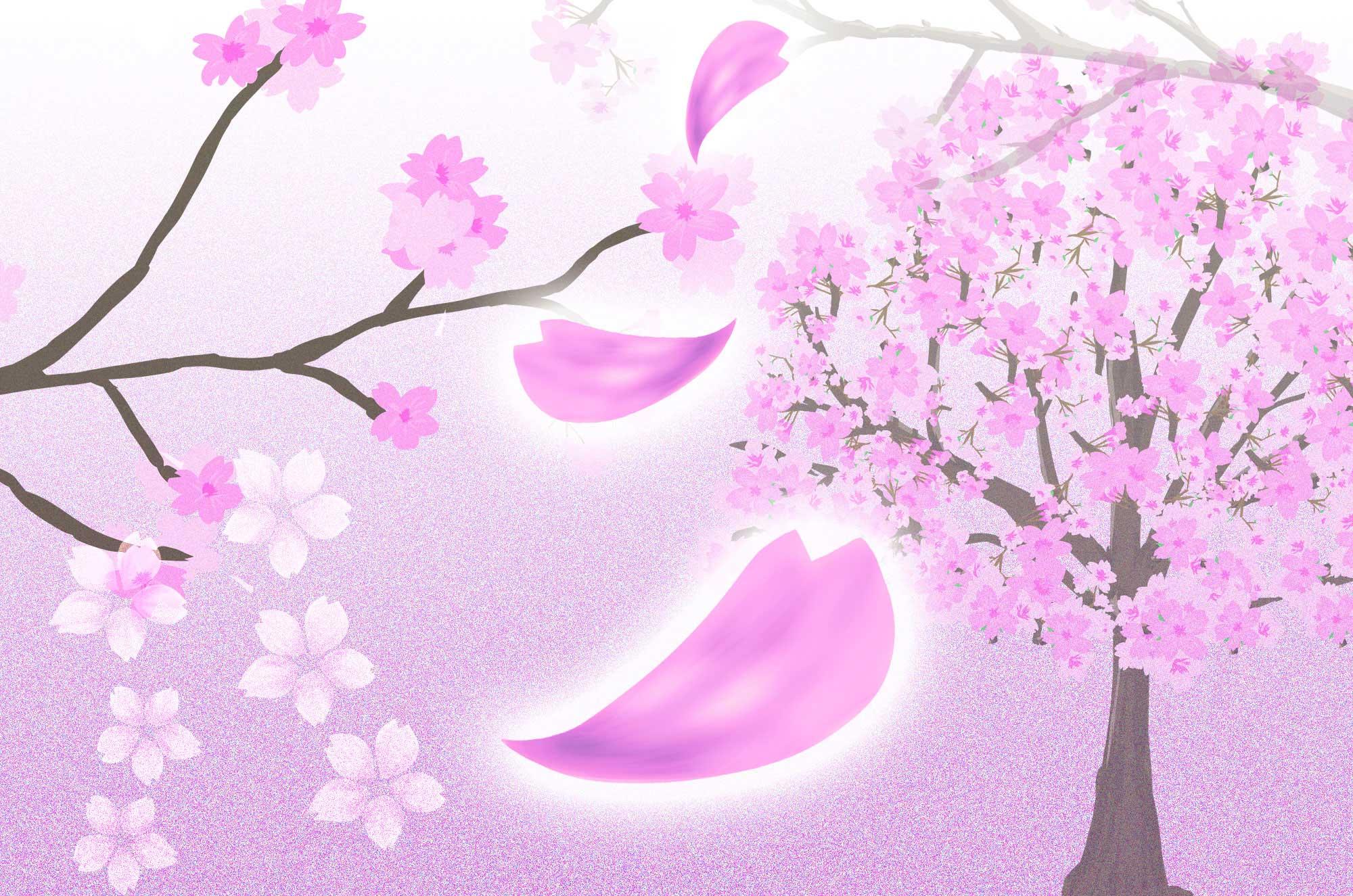 落ちる桜の花びらと満開の桜の花