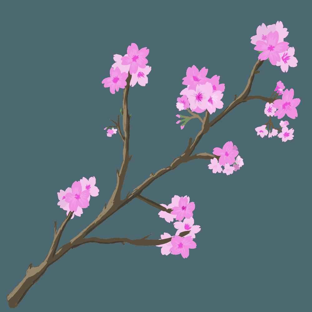 桜の花と枝のイラスト