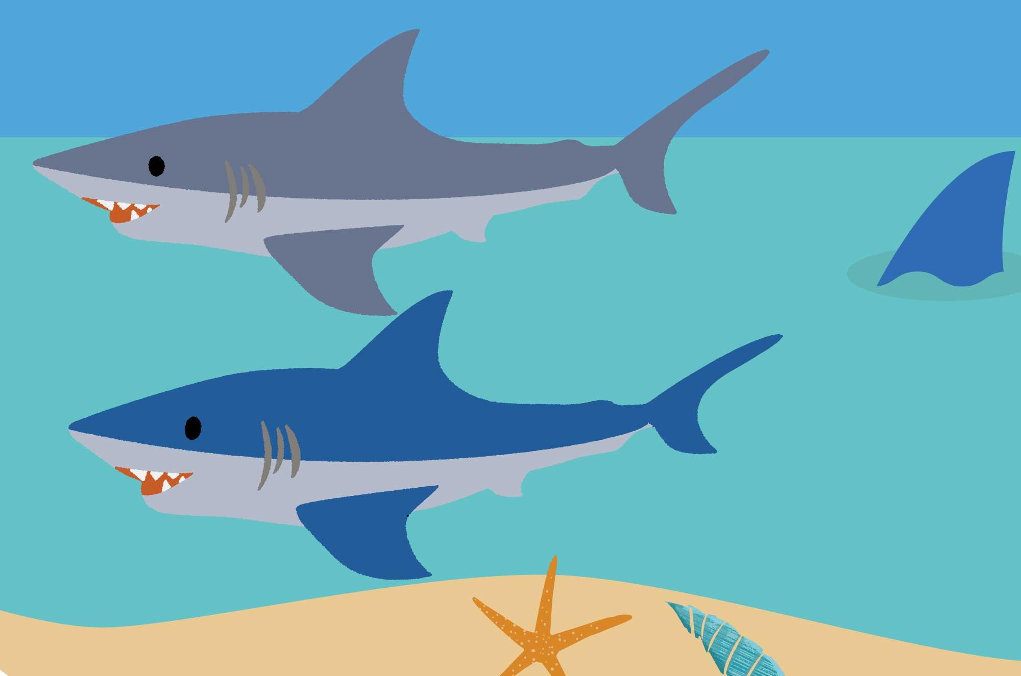 サメのイラスト - ビーチとジョーズの可愛い無料素材