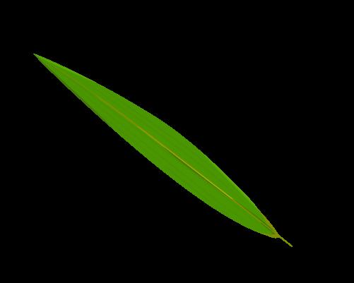 笹の葉のイラスト1