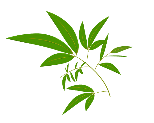 笹の葉のイラスト10