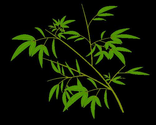 笹の葉のイラスト14