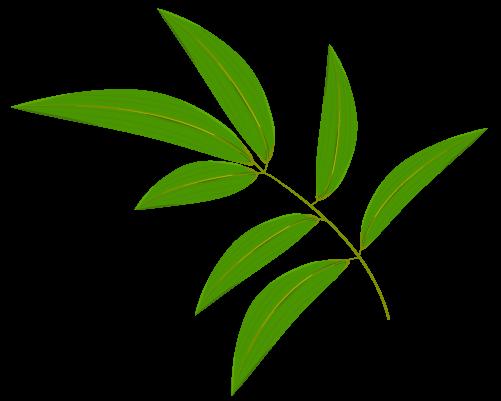 笹の葉のイラスト15