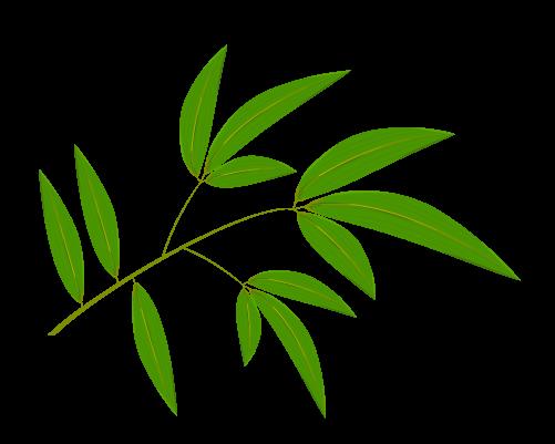 笹の葉のイラスト17