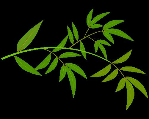 笹の葉のイラスト18