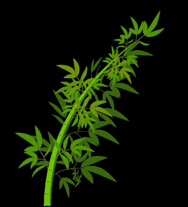 笹の葉と枝のイラスト1