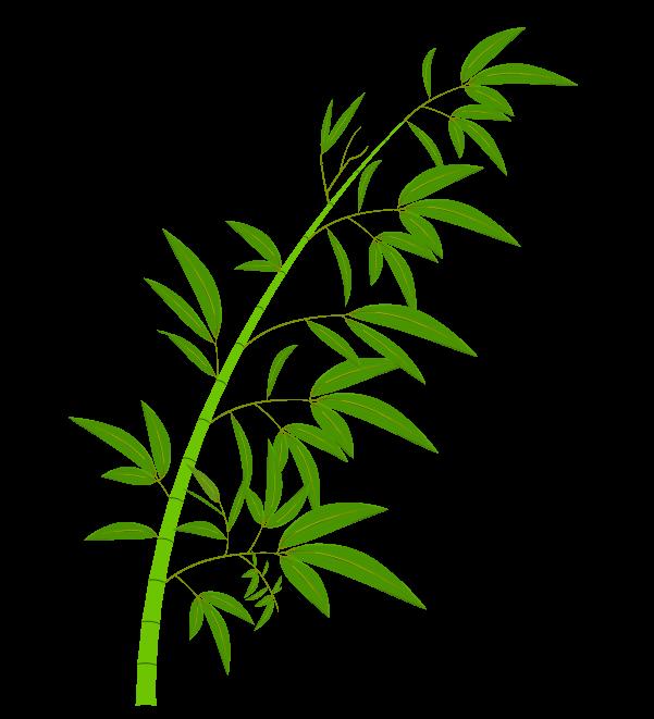 笹の葉と枝のイラスト3