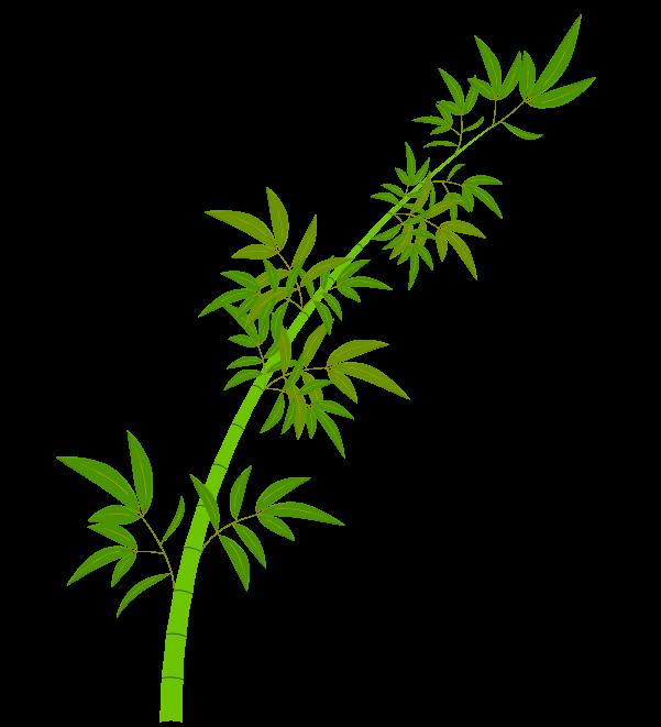 笹の葉と枝のイラスト4